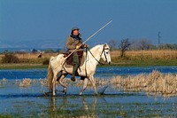 Guardian, Camargue