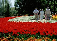 Tourists & Bright Flowerbeds at the Canberra Floriade - Annual Flower Festival  Canberra, Australia