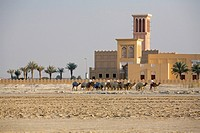 Falcon hospital and camels walking in foreground  United Arab Emirates