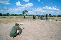 Man Photographing an Elephant Loxodonta africana Herd at a Waterhole  Savuti, Chobe National Park, Botswana