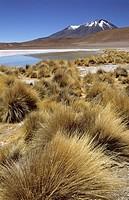 Laguna Cañapa. South Lipez, Bolivia.