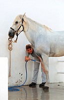 girl washing horse