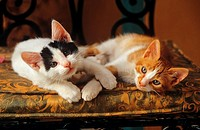two young cats lying on a pillow