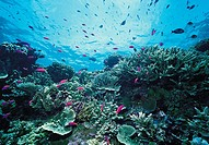 Environment & nature, Papua New Guinea, Coral Reef,