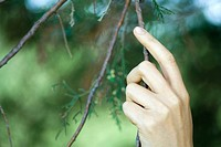 Woman touching evergreen branch