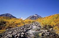 Fall colours, Kluane National Park, Yukon Territory, Canada