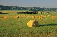 Qu´Appelle Valley near Grenfell, Saskatchewan, Canada