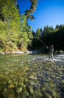 Fly fisher on the Cowichan River, near Skutz Falls on the Cowichan River, Cowichan Valley, British Columbia, Canada