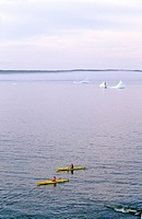 Kayakers in Witless Bay Ecological Reserve  Icebergs in the background, Newfoundland, Canada