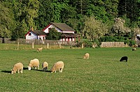 The Ruckle farm, Ruckle Provincial Park, Saltspring Island, Gulf Islands, British Columbia, Canada