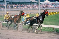 Harness racing at the Charlottetown Driving Park during Old Home Week, Prince Edward Island, Canada