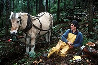 Man with horse, selectiving logging on Linnaea Farm land trust, Cortes Island, British Columbia, Canada