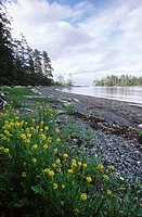 Queen Charlotte Islands, Haida Gwaii, Hot Spring Island Gandll K´in Gwaayaay, British Columbia, Canada