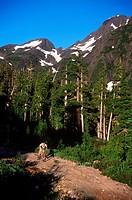 Mount Cain - mountain biking boy, Vancouver Island, British Columbia, Canada