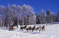 Dogsledding in the Cariboo region of British Columbia, Canada