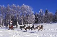 Dogsledding in the Cariboo region of British Columbia, Canada
