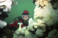 Diver on Edmonds Wreck, Vancouver Island, British Columbia, Canada