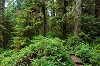 Rainforest trail at Pacific Rim National Park, Vancouver Island, British Columbia, Canada
