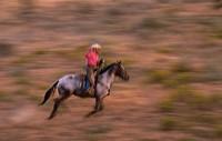 Cowboy Lassoing Horse