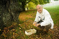 Germany, Baden-Württemberg, Swabian mountains, Senior man collecting mushrooms