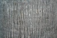 wooden texture, São Paulo, Brasil