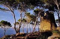 Torre de sa Pedrissa. Deia. Majorca, Balearic Islands. Spain