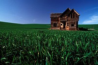 Old Wooden House in Green Field