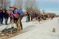 International Sled Dog Contest at the 30th annual Festival du Voyageur, St  Boniface, Manitoba