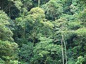 Atlantic forest, São Vicente, São paulo, Brazil