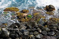 High angle view of rocks on the beach, Hookipa Beach Park, Maui, Hawaii Islands, USA