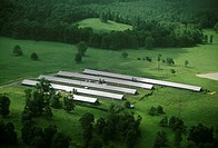 Chicken farm, Tennessee