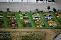 Experimental flower plots