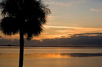 Silhouette of a palm tree, St  Augustine Beach, Florida, USA