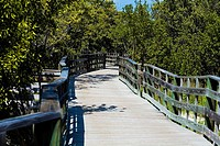 Boardwalk in the forest, Tropical Hardwood Hammock, Florida Keys, Florida, USA