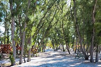 Trees in a forest, Fort Zachary Taylor State Park, Key West, Florida, USA