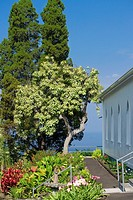 Trees and flowers near a church, St  Benedict's Catholic Church, Honaunau, Hawaii Islands, USA