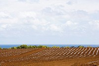 Ploughed field at the seaside, Twin Falls, Maui, Hawaii Islands, USA