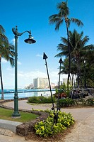 Palm trees along a path, Waikiki Beach, Honolulu, Oahu, Hawaii Islands, USA