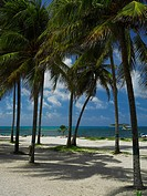 Palm trees on the beach, Spratt Bight Beach, San Andres, Providencia y Santa Catalina, San Andres y Providencia Department, Colombia