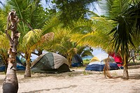 Palm trees and tents on the beach, Paya Bay Resort, Roatan, Bay Islands, Honduras