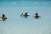 Three people snorkeling in the sea, Roatan, Bay Islands, Honduras