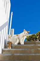 Low angle view of a cat on steps, Greece