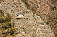Old ruins of steps in a forest, Choquequirao, Inca, Cusco Region, Peru