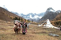 Woman standing by yak,, Xiaojin County, Aba State, Sichuan Province of People´s Republic of China, FOR EDITORIAL USE ONLY