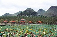 Scenery of lotus flower garden in Zhaodi, Anlong County, Guizhou Province of People´s Republic of China