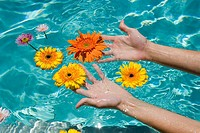View of a woman´s hands touching flowers floating in a swimming pool