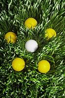 Yellow golf balls surrounding white golf ball in grass