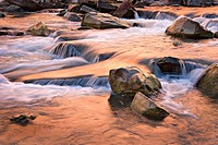 Autumn colors reflecting in tumbling waterfalls in Virgin River in Zion National Park, Utah, USA