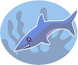 Illustration of a shark