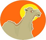 Illustration of a camel